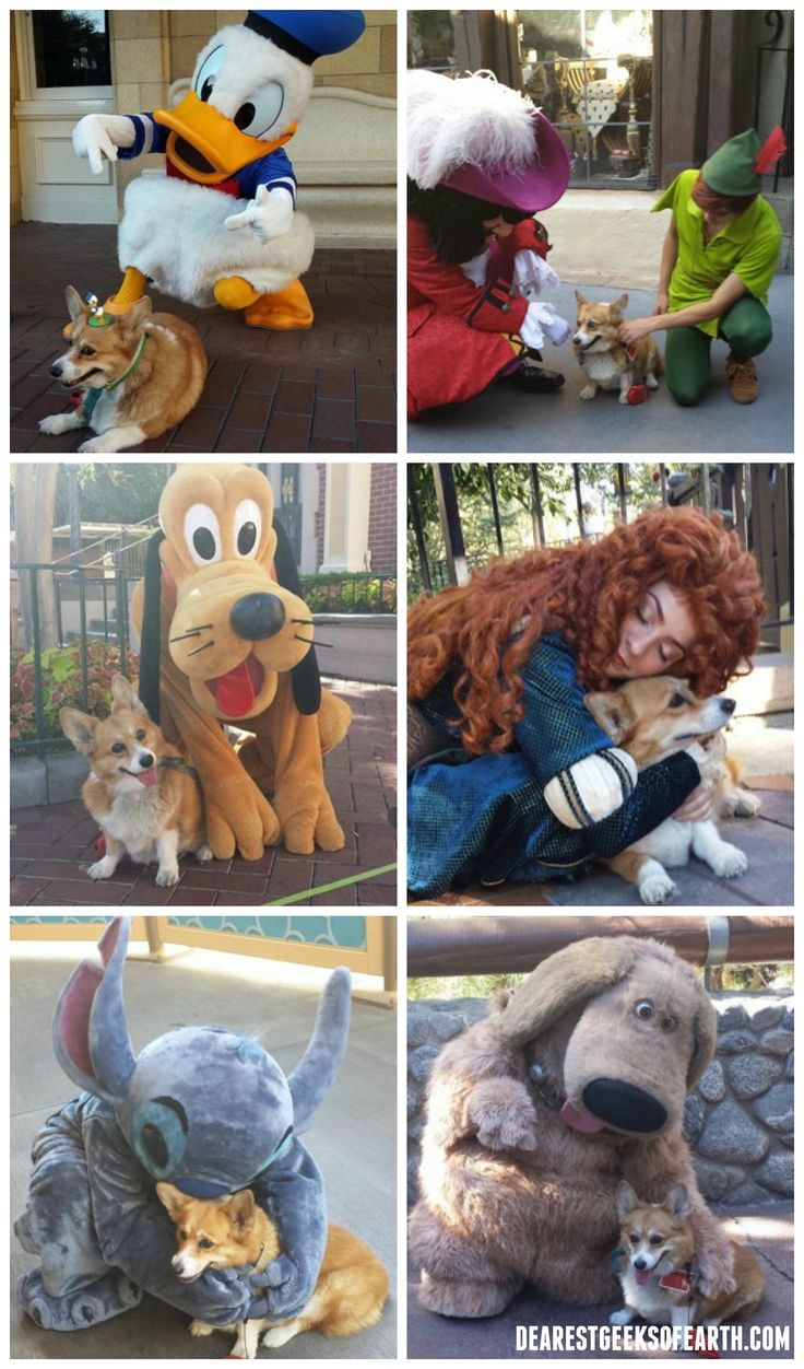 This is what happens when you take a Corgi to Walt Disney World.<<I shall do this with my own dog (husky or Dalmatian )