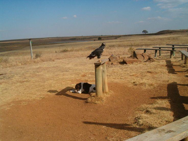 South Africa - Dullstroom Bird of Prey and Rehabilitation Centre