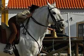 Image result for Equitação de Trabalho