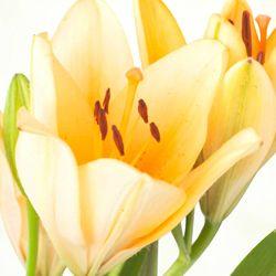 De 8 Martie, iti doresc sa ai o zi asa cum o visezi! La multi ani, draga mea! http://ofelicitare.ro/felicitari-de-8-martie/la-multi-ani-draga-mea-728.html