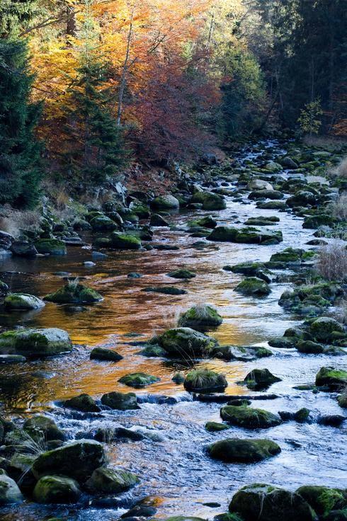Magical river in the Šumava National Park in Czech Republic by Andrea Nemcova.
