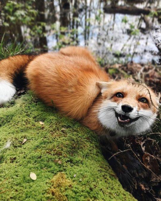 A Fantastic Fox