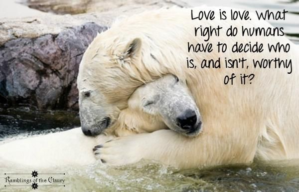 Love is love. What right do humans have to decide who does and doesn't deserve it? #animals #love #polarbear