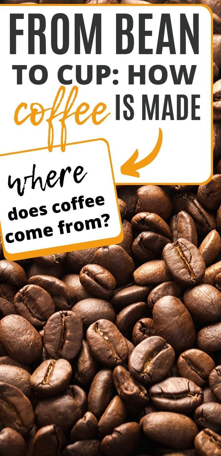 How Is Coffee Made Everything You Need To Know From Bean To Cup In 2020 Coffee Recipes Homemade Coffee Craving Coffee