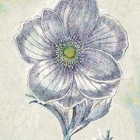 Framed Belle Fleur II