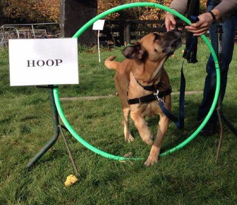 Through the hoop.
