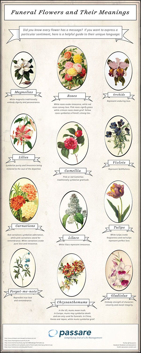 Did you know every flower has a meaningful message? If you're sending flowers to a funeral and want to express a particular sentiment, here is a helpful guide to their unique language.