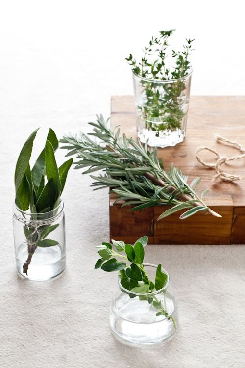 herbs: individually for each guest as natural tabletop decor