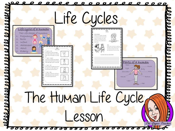Human Life Cycles - Complete Science Lesson | Unprinted and ...