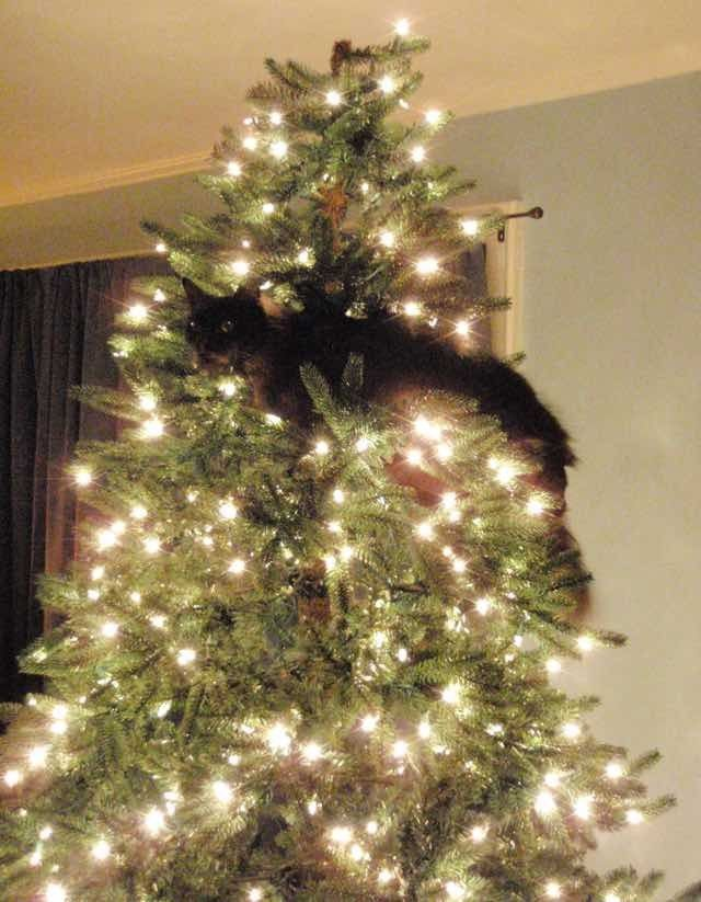 Cats Proud of their Work with the Christmas Tree