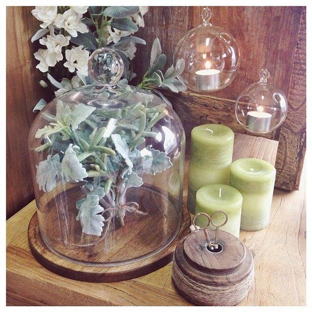 Glassware - perfect for terrariums!