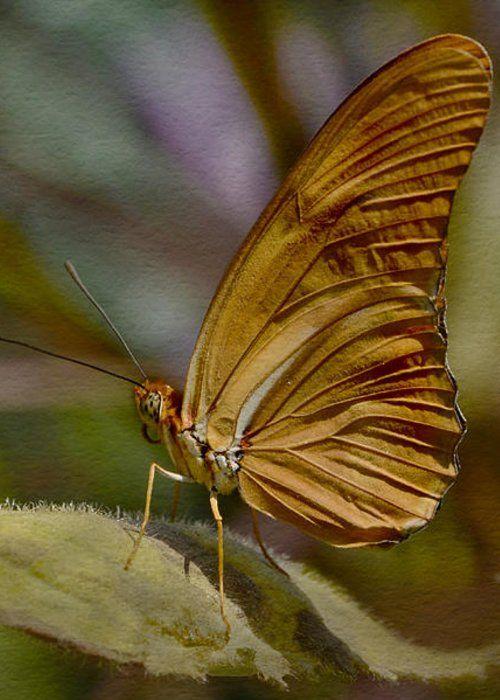 Julia Longwing Butterfly by Ann Bridges