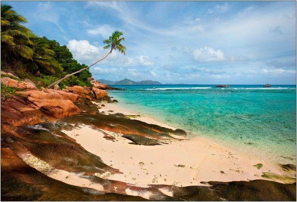 Tropical scene from The Wonderous Design magazine