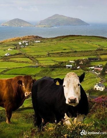 """Welcome to our home, County Kerry, known locally as the Kingdom!"""
