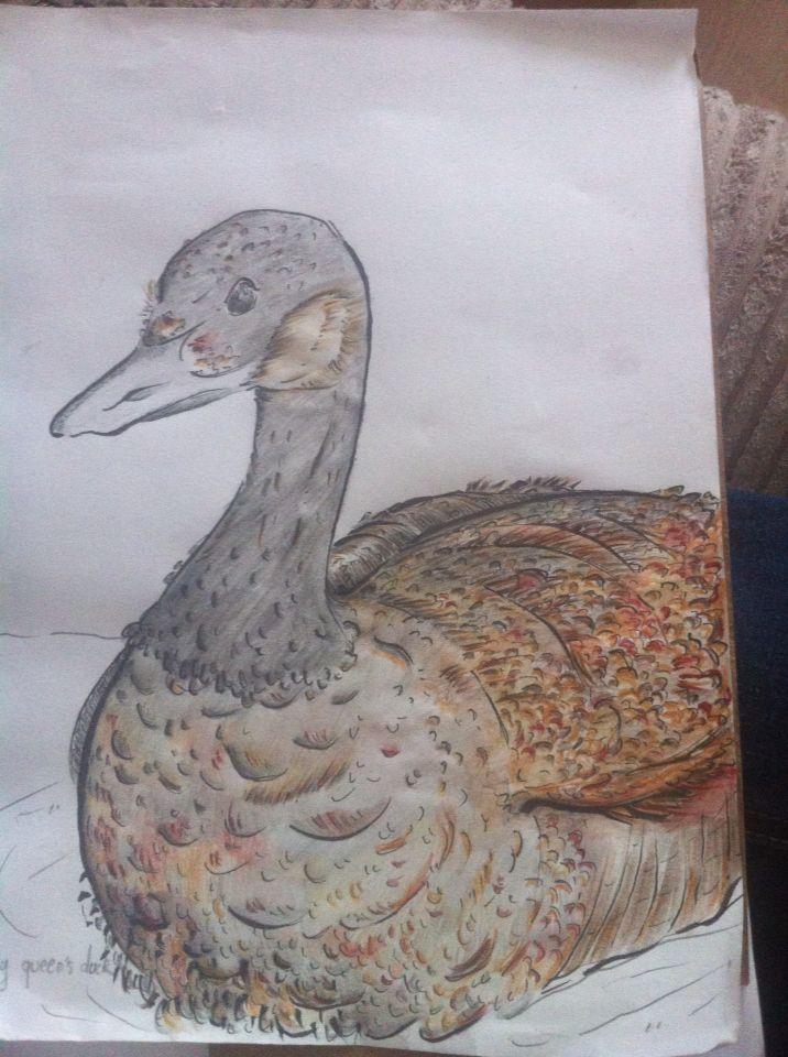 Queen's duck....koak!