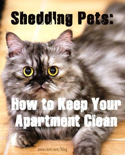 Your pets are adorable–-but let's be honest, shedding onto every piece of furniture in your apartment is not as cute. Here are some tips to fight shedding and keep your home clean.