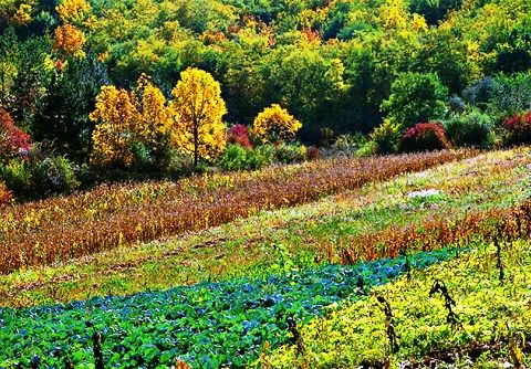 Regiunea Moldova se invecineaza la est cu Basarabia, la nord cu Basarabia si Bucovina, la vest cu Bucuvina si Transilvania si la sud cu Muntenia si Dobrogea...