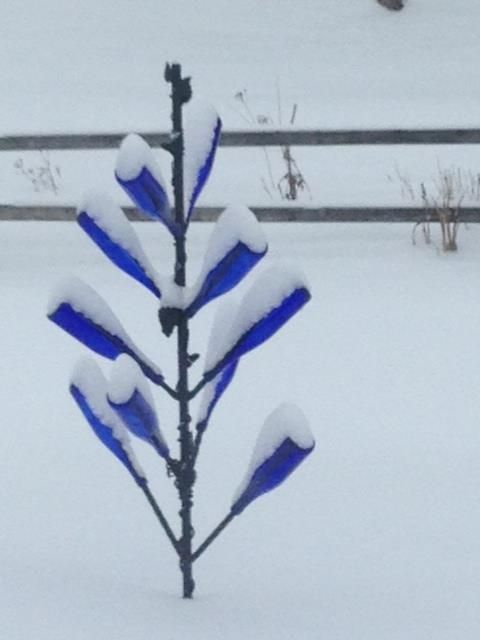 """Thank you to reader Gail De Salvo for sending this photo of a bottle tree in Illinois. She said she didn't think the northern """"haints"""" would know what do to with it!"""