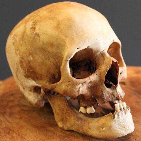 the 25+ best human skull ideas on pinterest | human skull anatomy, Skeleton