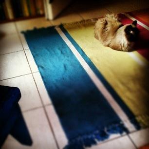 Ιndifference cat on the mat