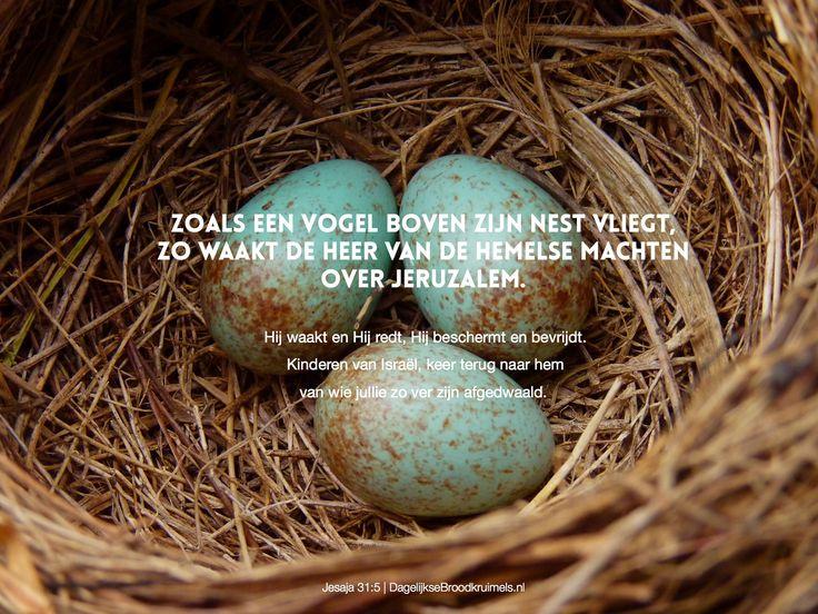 Zoals een vogel boven zijn nest vliegt, zo waakt de HEER van de hemelse machten over Jeruzalem, Hij waakt en Hij redt, Hij beschermt en bevrijdt. Kinderen van Israël, keer terug naar hem van wie jullie zo ver zijn afgedwaald. Jesaja 31:5 #Betrouwbaarheid, #God, #Kinderen http://www.dagelijksebroodkruimels.nl/jesaja-31-5/