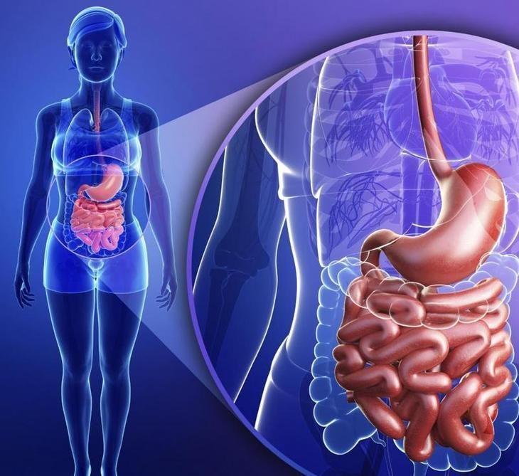 Как известно, очень важную роль в полноценной жизни человека играет кишечник. Он участвует в пищеварении, всасывает из пищи полезные вещества, которые так нужны нашему организму для нормального функц...