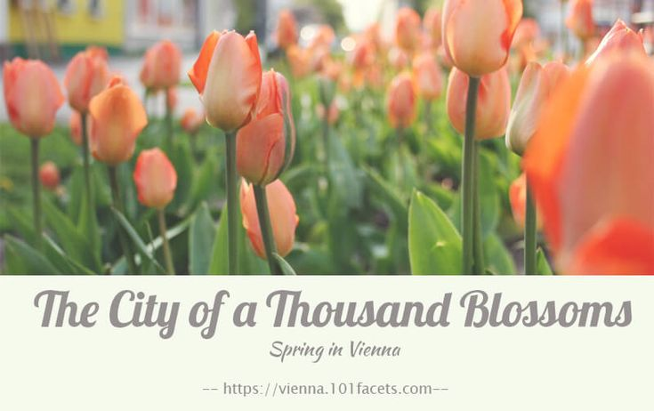 The City of a Thousand Blossoms
