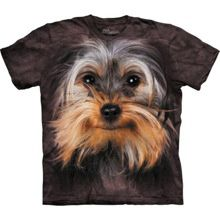 Yorkshire Terrier Face