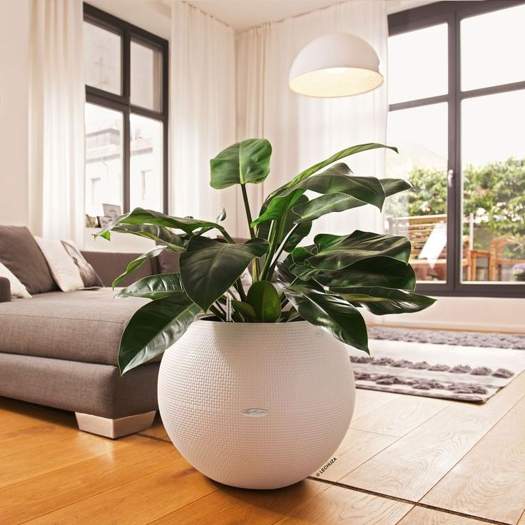 Exceptional Large Sphere Planter: Puro 50 Self Watering Pot | Gardeners.com