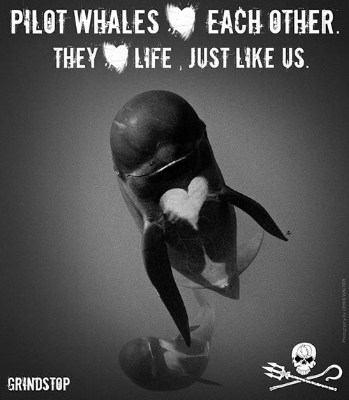 pilot whales love each other