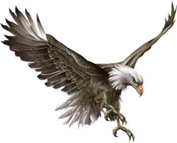 eagle - Google-Suche