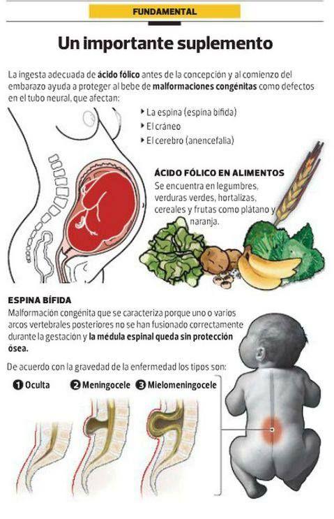 El ácido fólico es una vitamina B. Ayuda al organismo a crear células nuevas. Todas las personas necesitan ácido fólico. Es muy importante para las mujeres en edad fértil.