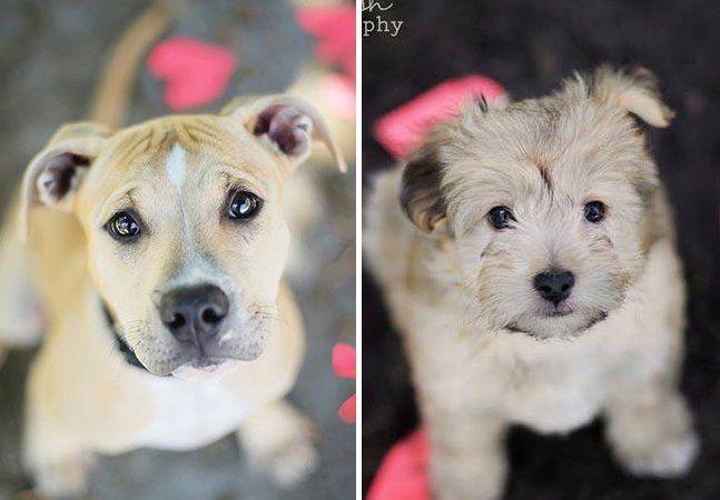 """Admiramos muito quem promove a adoção de animais. Seja apoiador de abrigo, voluntário que tira um cão ou gato das ruas ou quem simplesmente desenvolvemodos criativos para incentivar o ato (relembre o que mostramos aqui). E é esse o caso de Jessica Trinh, uma jovem fotógrafa americana autora do projeto """"Let It Rain Love"""" (""""Deixe chover amor""""). Basicamente, são fotos de cães que esperam a adoção fazendo uma singela """"cara de pidão"""". Os retratos visam dar um alcance maior aos animais, já que…"""