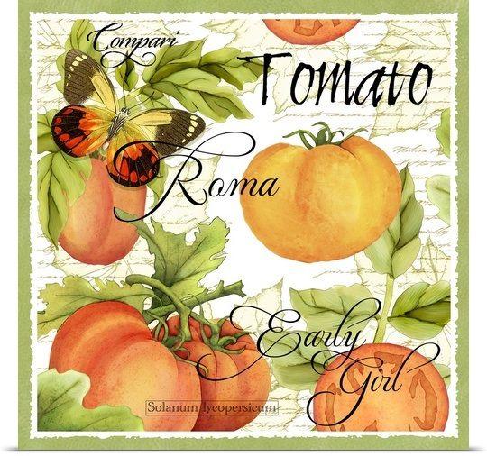 Botanical Tomato Photo Canvas Print | Great Big Canvas