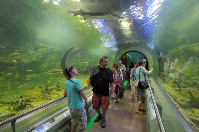 Poroszló- Óriásakvárium - Giant aquarium