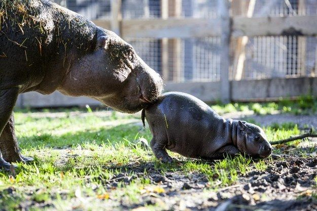 """She's the cutest little fatty you can imagine"", Parken Zoo's Jennie West Anderson told the Aftonbladet newspaper. 