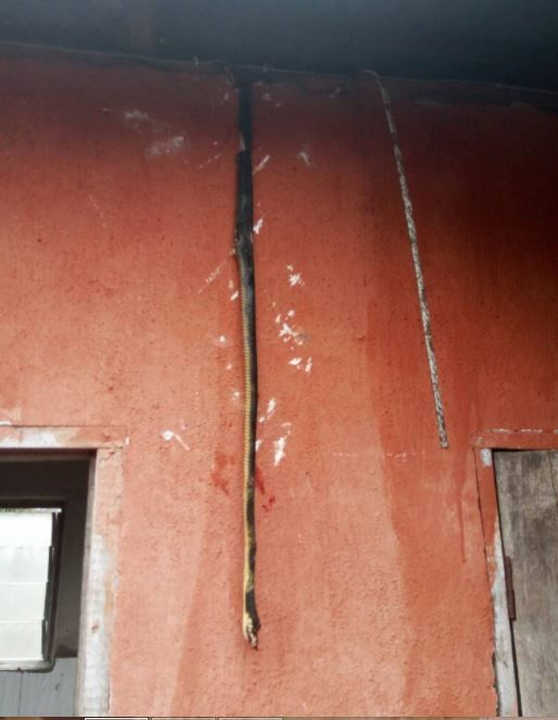 Long Snake Invades Madonna University Toilet....See What Happened After (Photos)