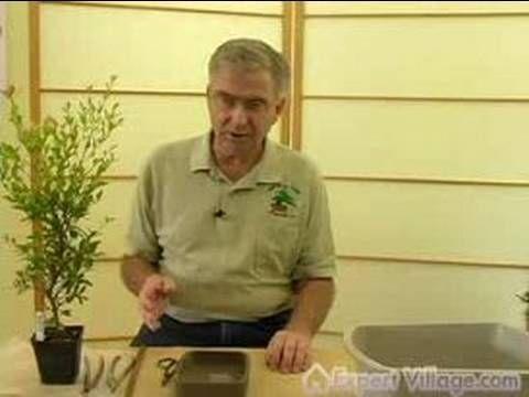 How to Grow Bonsai Trees : How to Make your Own Bonsai : Bonsai Lessons for Beginners  http://www.webgardenofeden.com/bonsai-trees-turning-trees-to-bonsais-technique-video/#