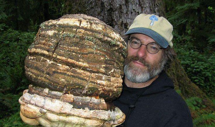 Un champignon tueur d'insectes, le brevet qui dérange Monsanto :: Paul Stamets a découvert un pesticide naturel et efficace
