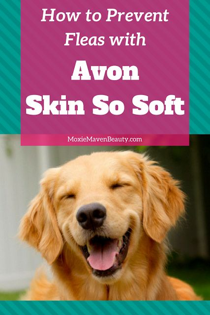 Best 25 skin so soft ideas on pinterest avon skin so soft sugar scrub shaving and smooth - Home remedies to keep fleas away ...