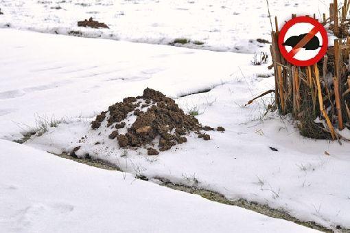 Gardenplaza - Maulwürfe mit Schallwellen sanft, aber effektiv vom Garten fernhalten - Hügelig war gestern!