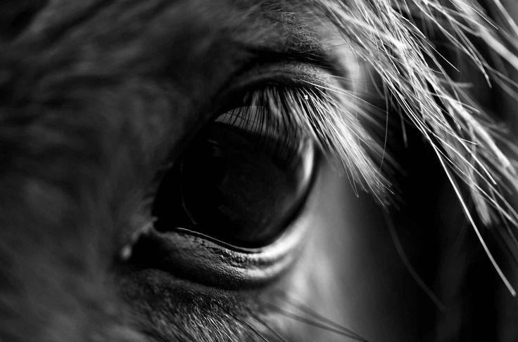 L'oeil d'un cheval sauvage dans le parc national deBrecon Beacons au Pays de Galles.