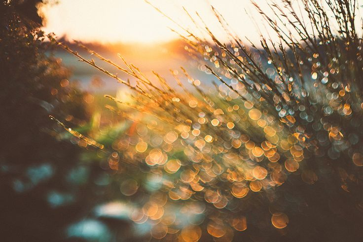 """""""On Freelensing"""" Featured photographer's blog by Tracy Jade Photography"""