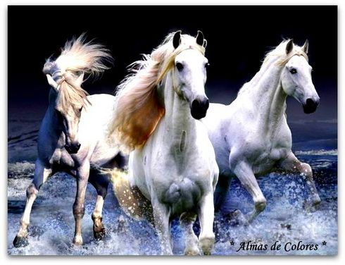 https://www.facebook.com/pages/Tengo-el-Alma-de-Colores/240330932802882