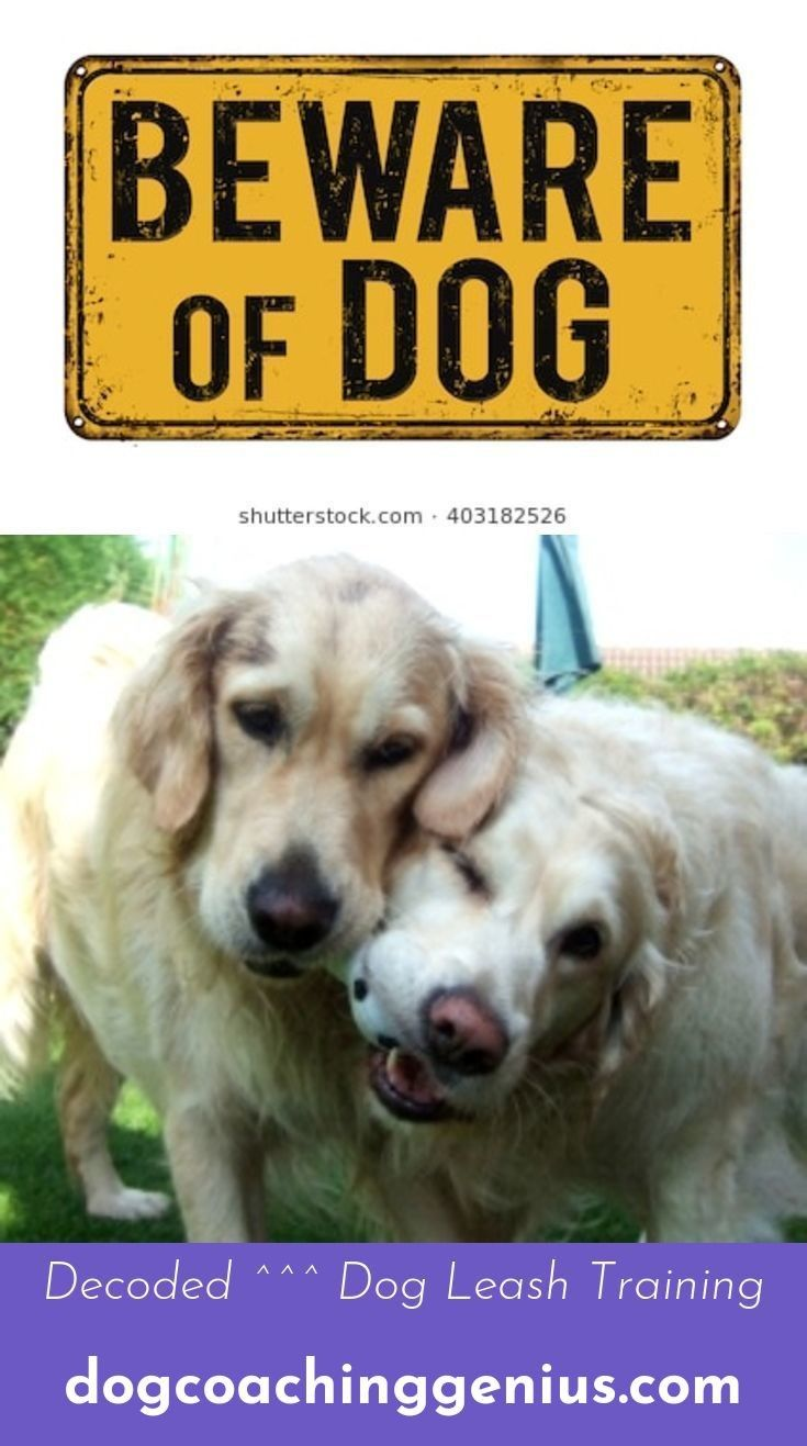 Read Information On Dog Leash Training Dog Leash Training Dog