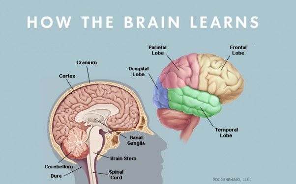 How the Brain Learns from Medical News Today | Brain stem ...
