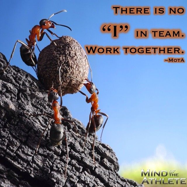 """Motivational Quotes For Sports Teams: There Is No """"I"""" In Team. Work Together."""