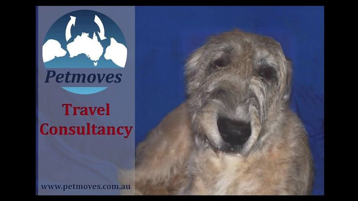 Petmoves Travel Consultancy