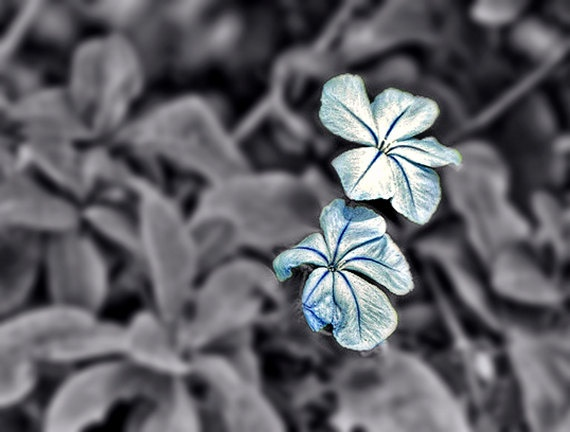 Black and white with color pop iridescent by desertlifephotos 2 00
