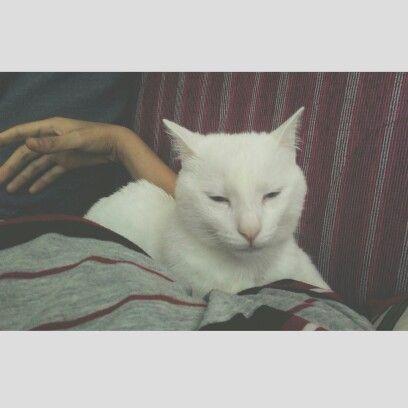 #kedi #beyaz #whitecat #vscocam